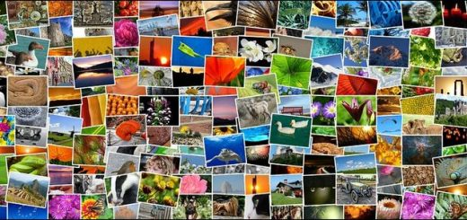 The Best Free Ways to Share Photos With Friends and Family (Other Than Facebook)